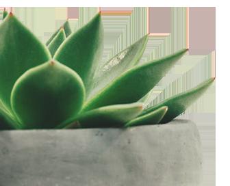 MacLucan - Plantas para una estrategia de contenidos